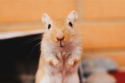 What Seeds Can Gerbils Eat?