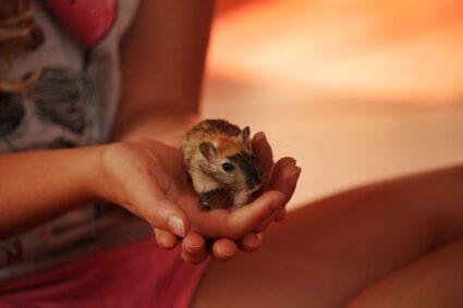 are gerbils affectionate?