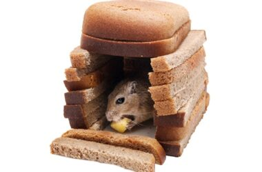 can gerbils eat bread?