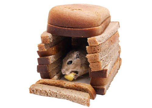can gerbils eat bread?