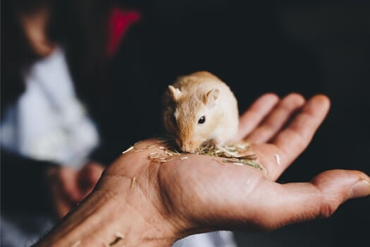 do gerbils bite more than hamsters?
