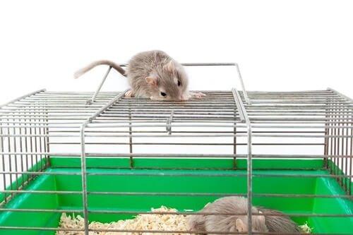 gerbil biting cage bars