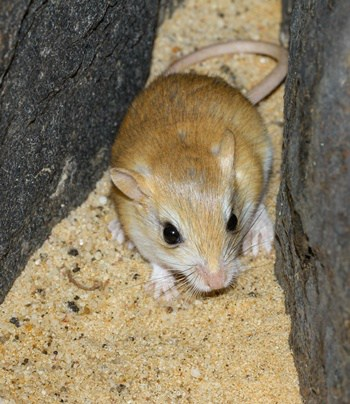 how much exercise do gerbils need?