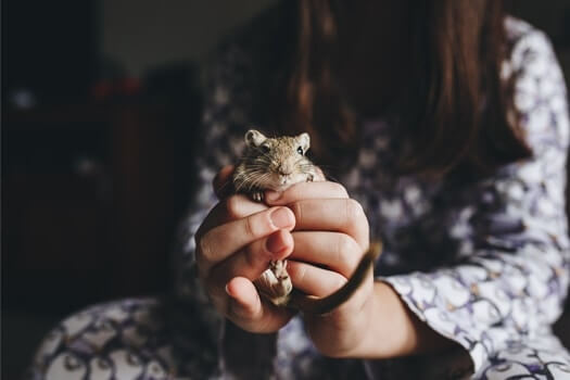 how to hold a gerbil without it biting you