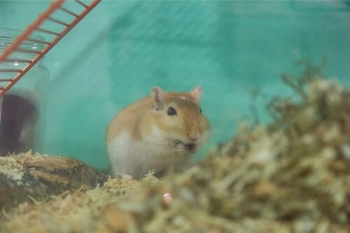 insects gerbils eat