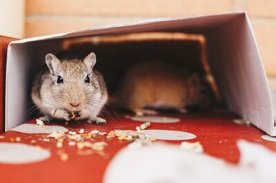 is it safe for gerbils to eat seeds?