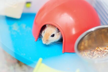 scent gland tumors in gerbils