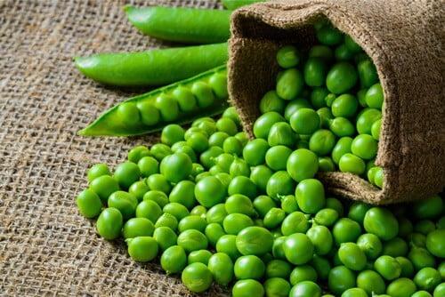 Can Gerbils Eat Peas?