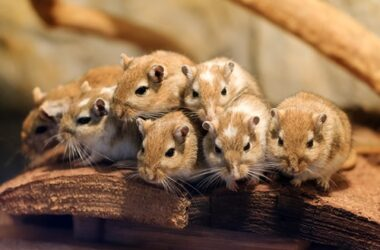 Signs of Gerbils Declanning