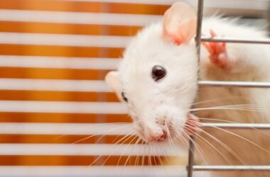 What are the different types of rodents?