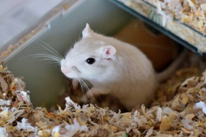 best bedding for gerbils to burrow