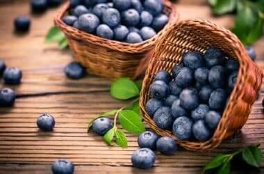 can gerbils eat blueberries?
