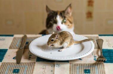 do cats like gerbils?