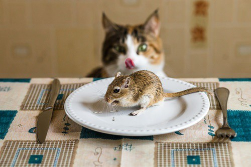 do cats like gerbils?