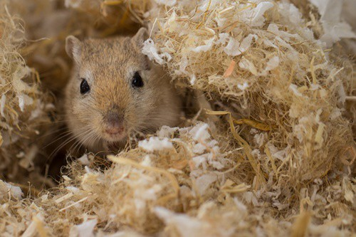 where to take unwanted gerbils