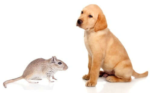 are gerbils OK with dogs?