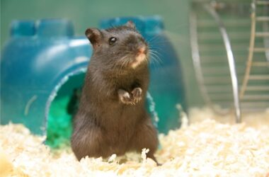 can gerbils be left alone for a week?