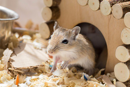 can gerbils cry?