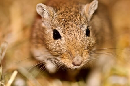 can gerbils play outside?