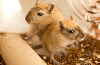 can gerbils survive cold weather?