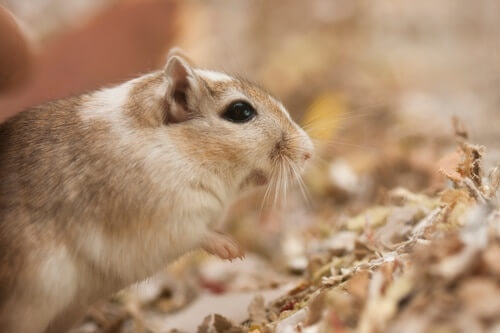 can gerbils survive outside?