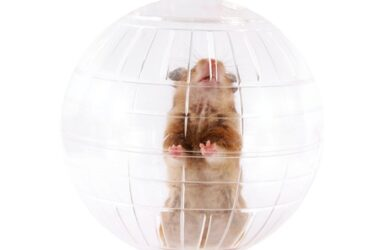 do gerbils like exercise balls?