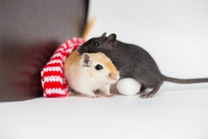 how to keep gerbils warm in the winter