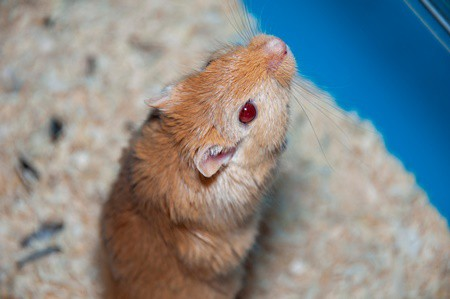 can gerbils and rabbits live together?