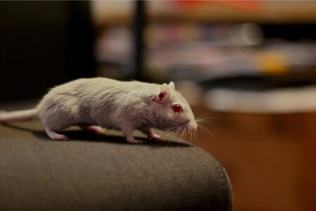 how do gerbils see the world?