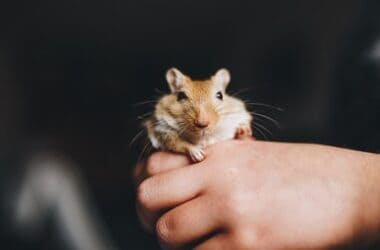 what are the best names for gerbils?