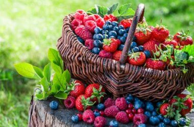 what berries can gerbils eat?
