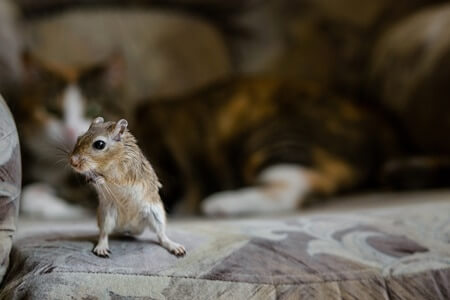what can gerbils see?