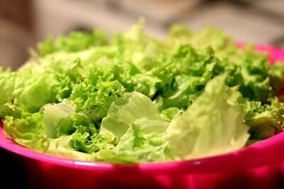 Can Gerbils Eat Lettuce?