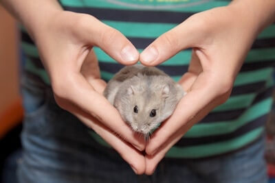 are hamsters cuddly pets?