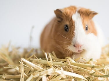 best small pets for college students