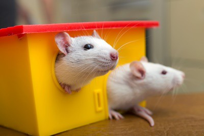 best small pets for depression