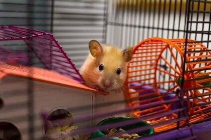 What Small Pets Are Good For Depression Gerbilwelfare Com