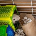 Best Place To Put A Gerbil Cage