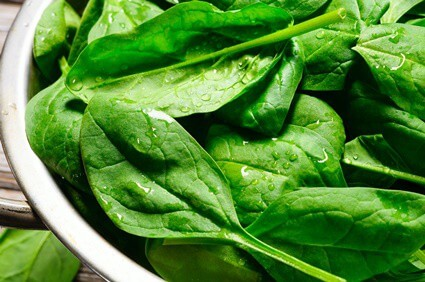 are gerbils allowed to eat spinach?
