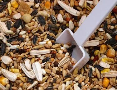 can gerbils eat bird seed?