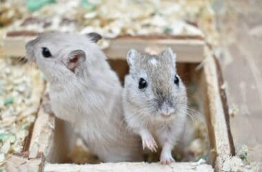 how fast are gerbils?