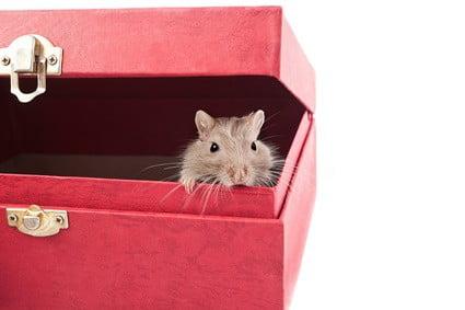 where do gerbils like to hide?