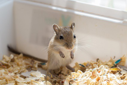 where should I put my gerbil cage?