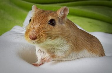 do gerbils poop a lot?