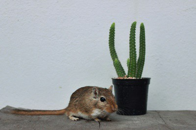 How To Gerbil-Proof A Room