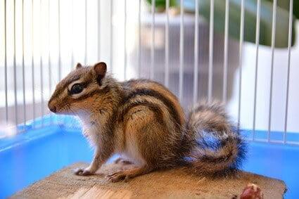are chipmunks awake at night?