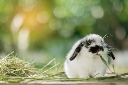 are rabbits awake at night?