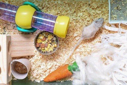gerbils kicking sawdust everywhere