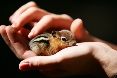 small pets that are awake during the day