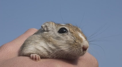 is it bad if a gerbil bites you?